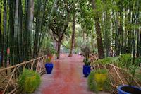Les bambous de Majorelle