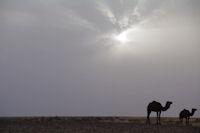 Lever de soleil sur l'Oued el Atach