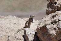 Un écureuil peu avant le Tizi n Aït Imi