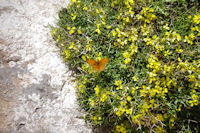 Un papillon sur un bouquet de fleurs jaunes