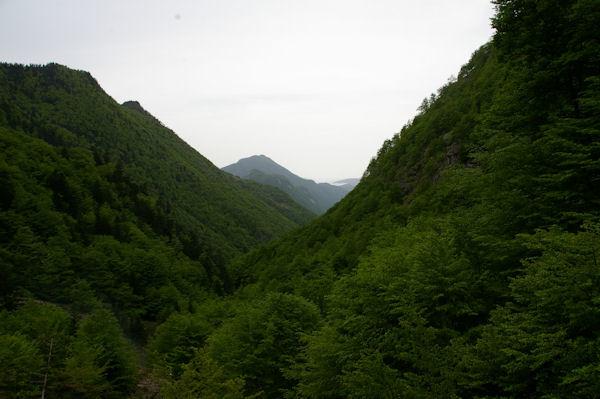 La vallée boisée de la rivière d_Ars, au fond, le Picou