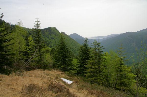 La vallée boisée de la rivière d_Ars