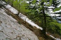 Une coulee d'avalanche sous le Tuc de Pediere