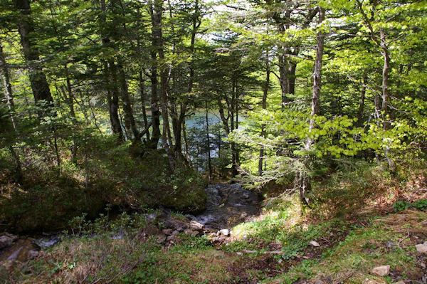 Dans les arbres, l_étang de Guzet