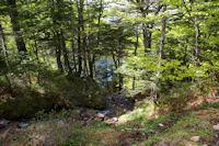 Dans les arbres, l'etang de Guzet