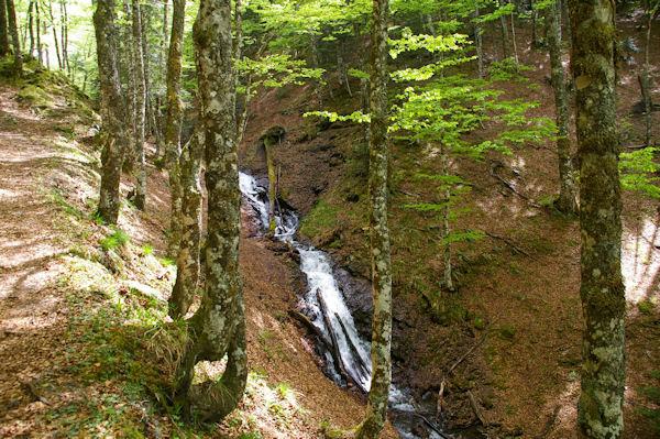 Le ruisseau descendant de l_étang de Guzet