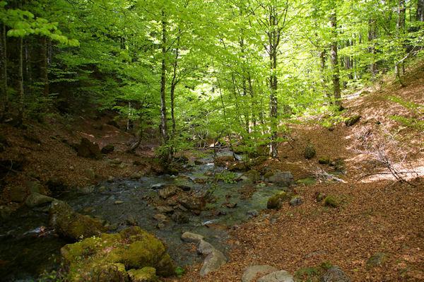 Le gué sur le ruisseau descendant de l_étang de Guzet