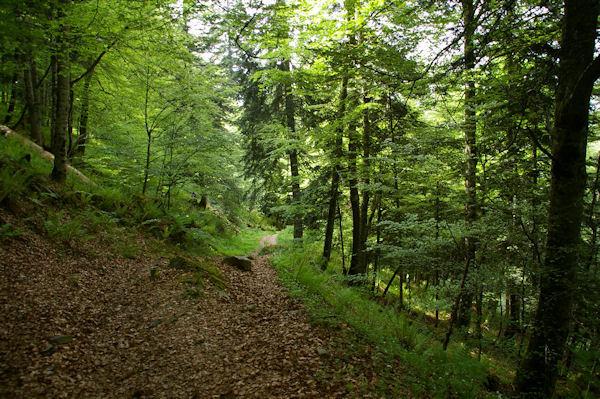 Le chemin dans les bois sous le Souliou vers Tuffé