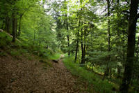 Le chemin dans les bois sous le Souliou vers Tuffe