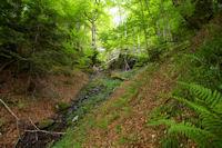 Un ruisseau vers Carbourisse