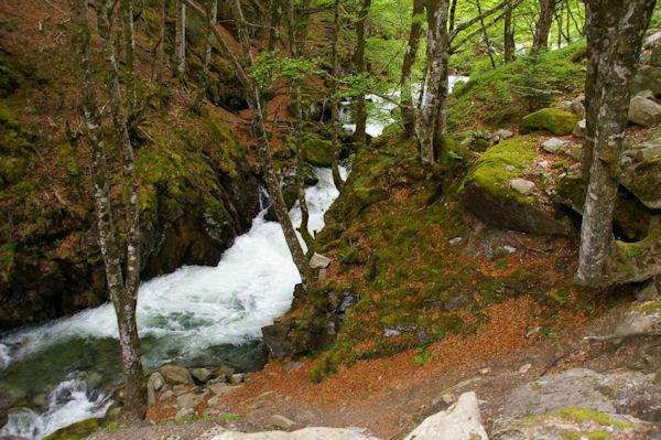 La rivière d_Ars, tumultueuse