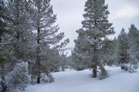 Dans les pins en revenant vers les 4 Chemins