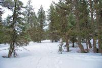 Dans les bois en remontant vers Piparlan
