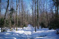 Chemin forestier au Quere de Cos vers Lanque