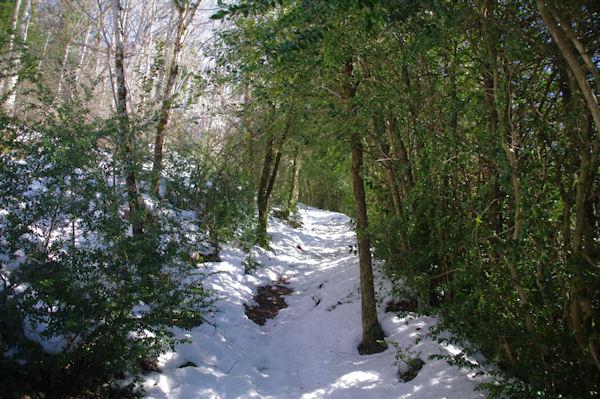 Montée dans les buis au dessus du Col del Bouich