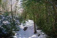 Montee dans les buis au dessus du Col del Bouich