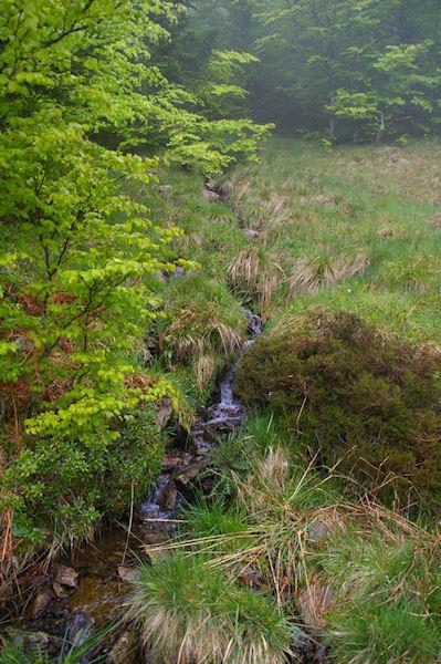 Un petit ruisseau qui descend de Pic de Fontfrede