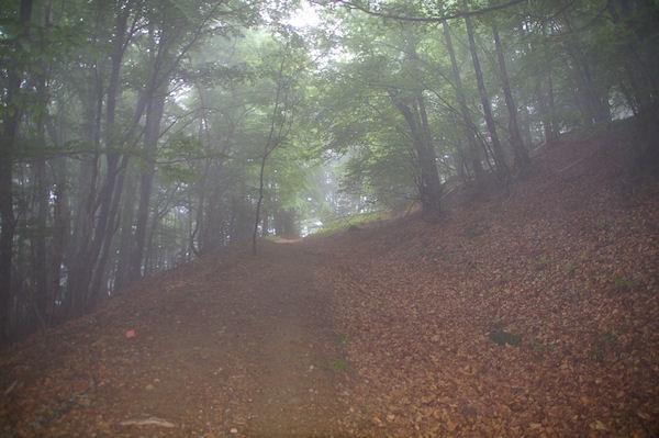 Le chemin boisé sous le Cap de Sarrou de Font Clare