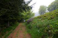 Le sentier sous le Sommet de Cap Long