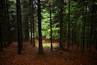 Dans le bois sous le Cap de Sarrou de Font Clare