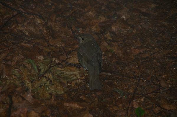 Un jeune oiseau près de la Goute de Founédis