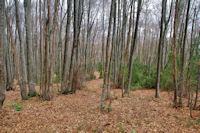 Dans la forêt du flanc Nord du Pic de l_Aspre