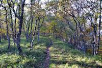 Le sentier à la Soula de Raissac