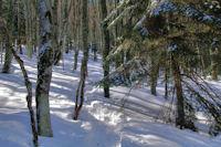 La trace dans la forêt au dessus de Campis