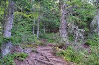 Dans le bois remontant le vallon du ruisseau de Cabane Longue
