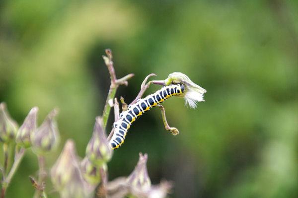Futur papillon