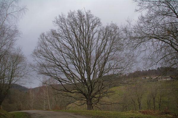Un arbre, c_est beau