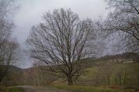 Un arbre, c'est beau