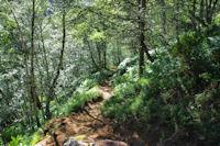 Dans la forêt en descendant vers l_Etang du Laparan