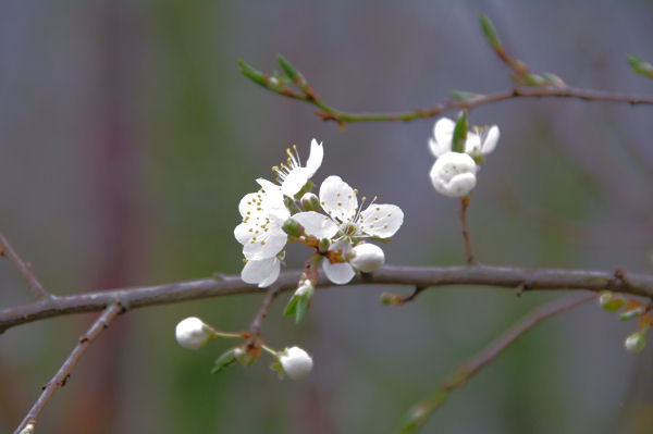 Début de printemps