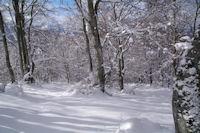 Dans le Bois de l'Aynat