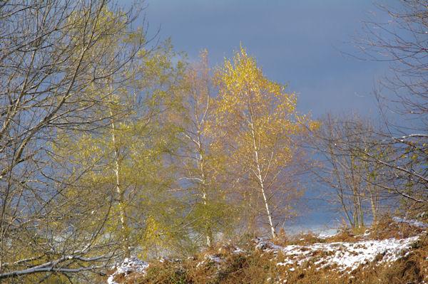 Belles couleurs automne-hivers