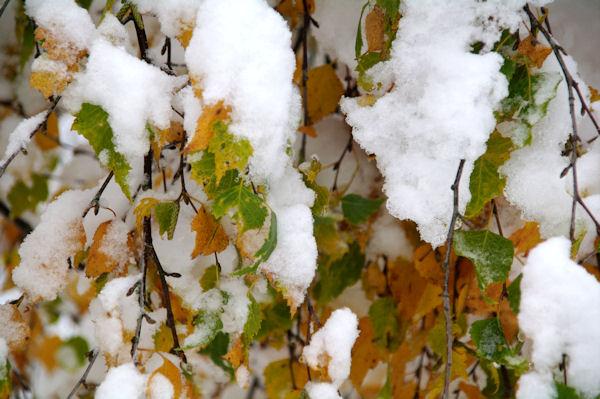 L_automne laisse la place à l_hiver