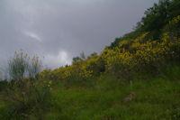 Le versant Sud du Tuc de Montcalibert