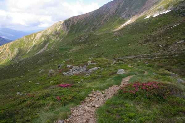 Le chemin bordé de rhododendrons menant à l_Etang Sourd