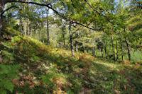 Dans la forêt du Pech de Montgaillard