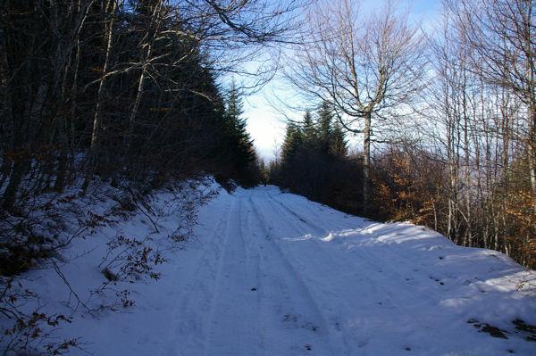 La route forestière de Font Frède enneigée