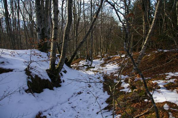 Un raccourci sur le chemin forestier de Font Frède