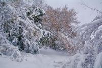 Sentier enneige pour monter au Pech de Foix