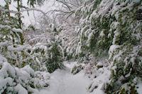 Le sentier dans la forêt domaniale de Pradière