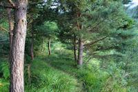 Dans la forêt sous la crête d_Esplas
