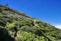 Le sentier montant à la crête menant au Pic de Sarrasi