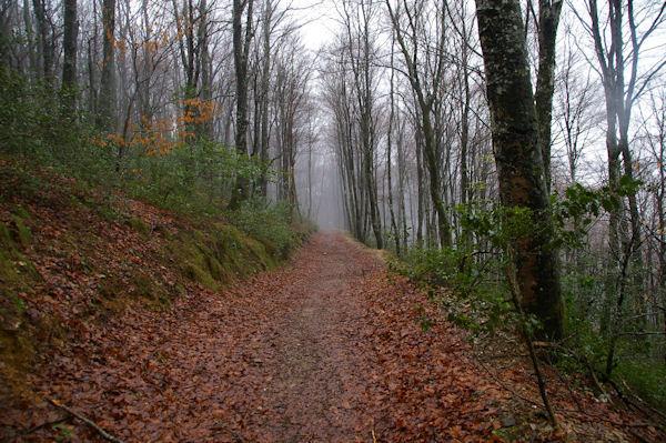 En descendant vers le Col des Marrous dans la forêt d_Alzen