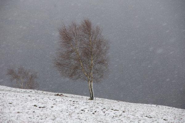 Il neige au Planel