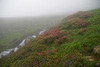 Le ruisseau de l'Etang Sourd
