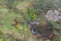 Un petit ruisseau fleuri